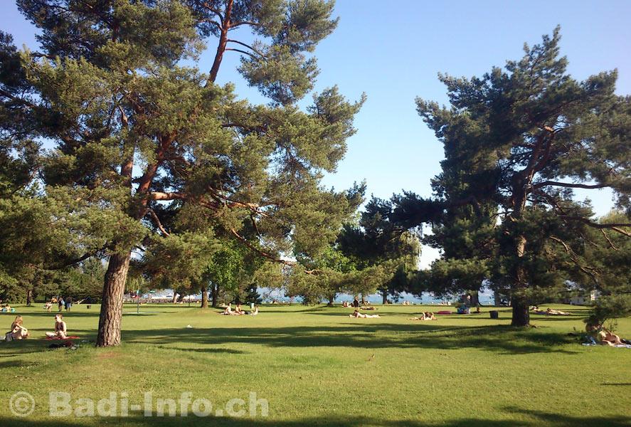 Lausanne piscine bellerive plage pelouse for Piscine lausanne