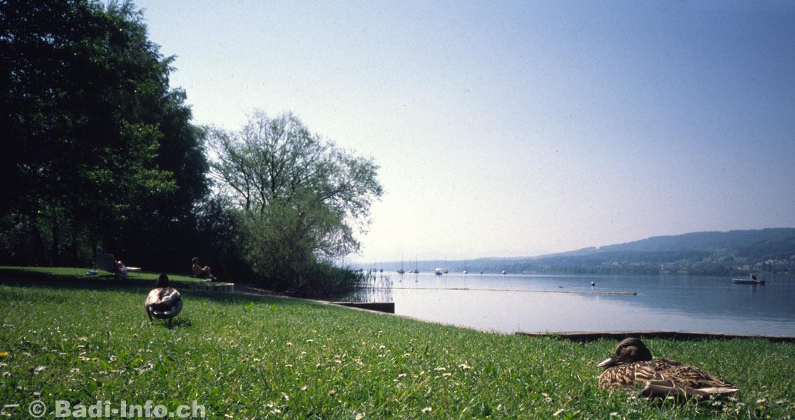 Greifensee Badi Furren